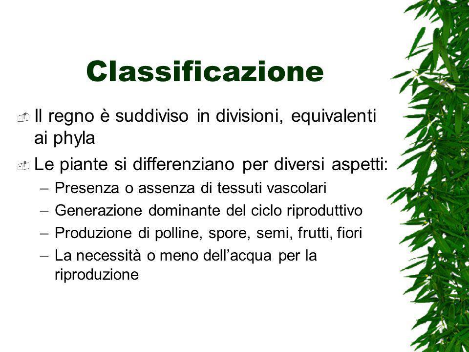 Classificazione Il regno è suddiviso in divisioni, equivalenti ai phyla Le piante si differenziano per diversi aspetti: –Presenza o assenza di tessuti