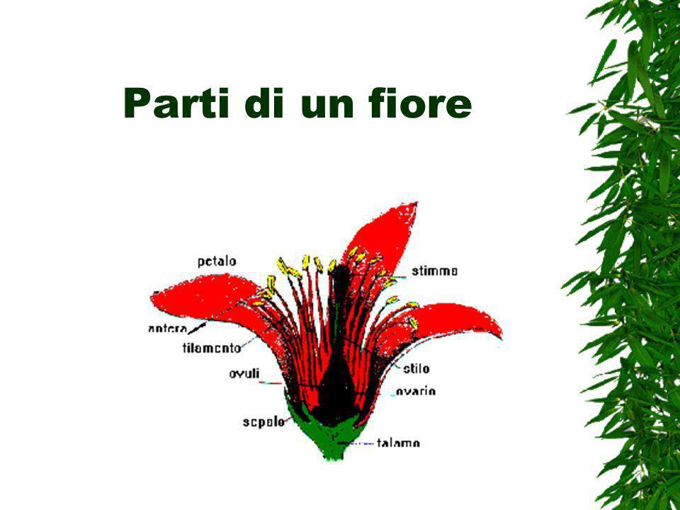 Parti di un fiore