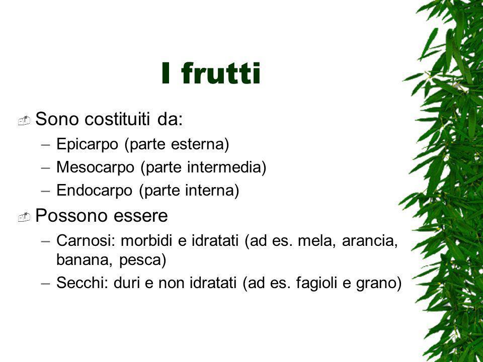 I frutti Sono costituiti da: –Epicarpo (parte esterna) –Mesocarpo (parte intermedia) –Endocarpo (parte interna) Possono essere –Carnosi: morbidi e idratati (ad es.