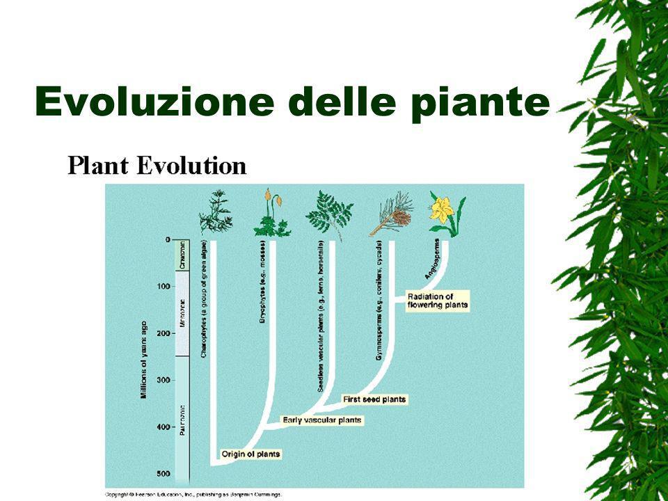 Evoluzione delle piante