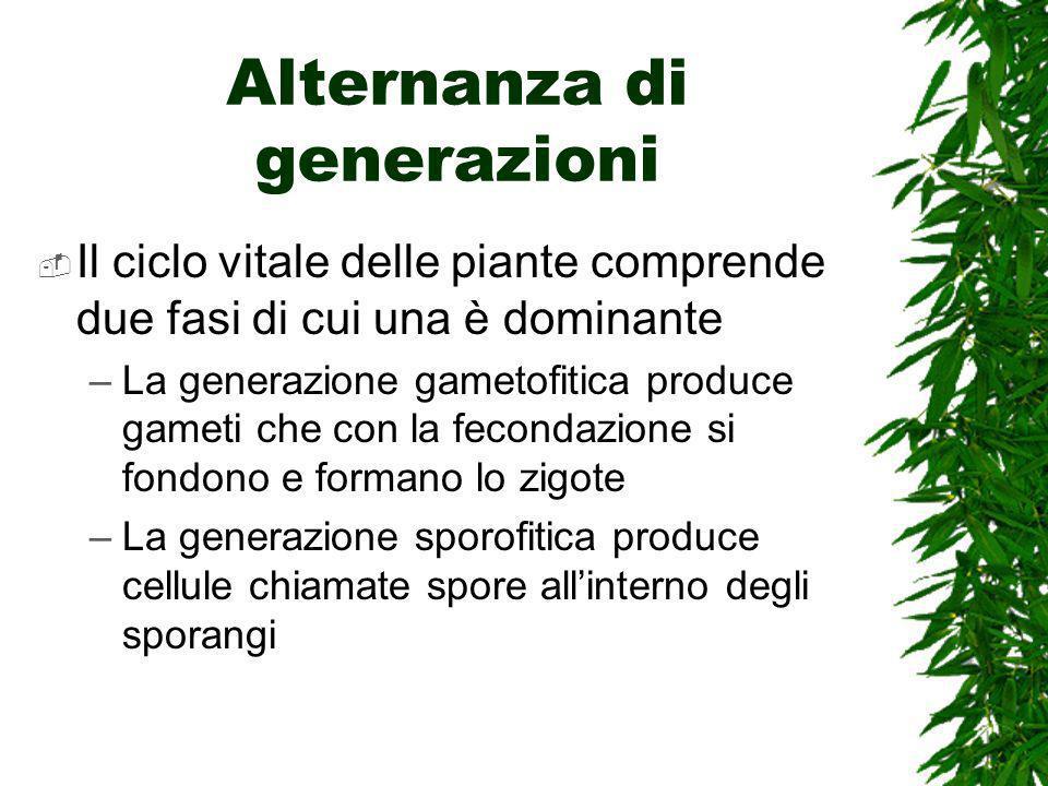 Alternanza di generazioni Il ciclo vitale delle piante comprende due fasi di cui una è dominante –La generazione gametofitica produce gameti che con la fecondazione si fondono e formano lo zigote –La generazione sporofitica produce cellule chiamate spore allinterno degli sporangi