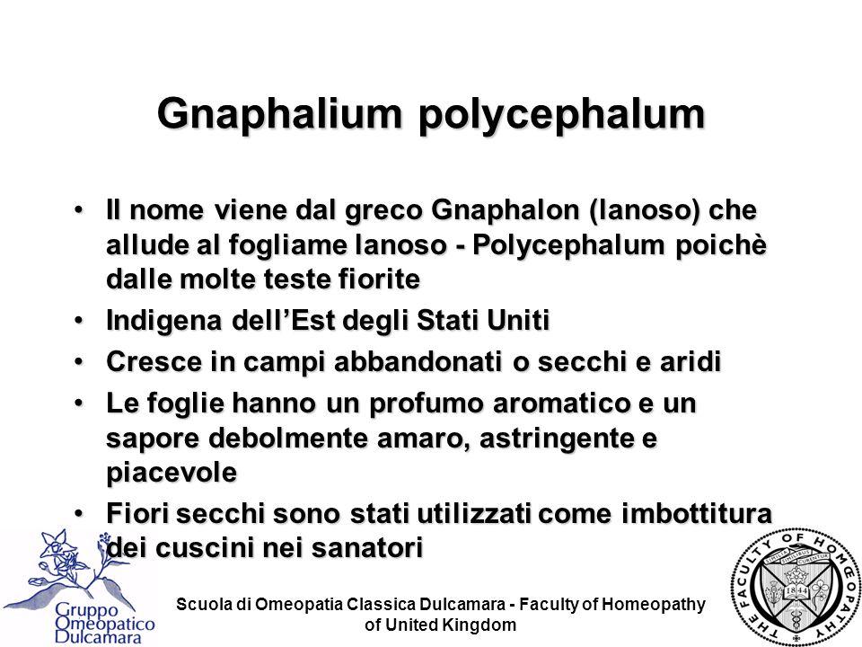 Scuola di Omeopatia Classica Dulcamara - Faculty of Homeopathy of United Kingdom Gnaphalium polycephalum Il nome viene dal greco Gnaphalon (lanoso) ch