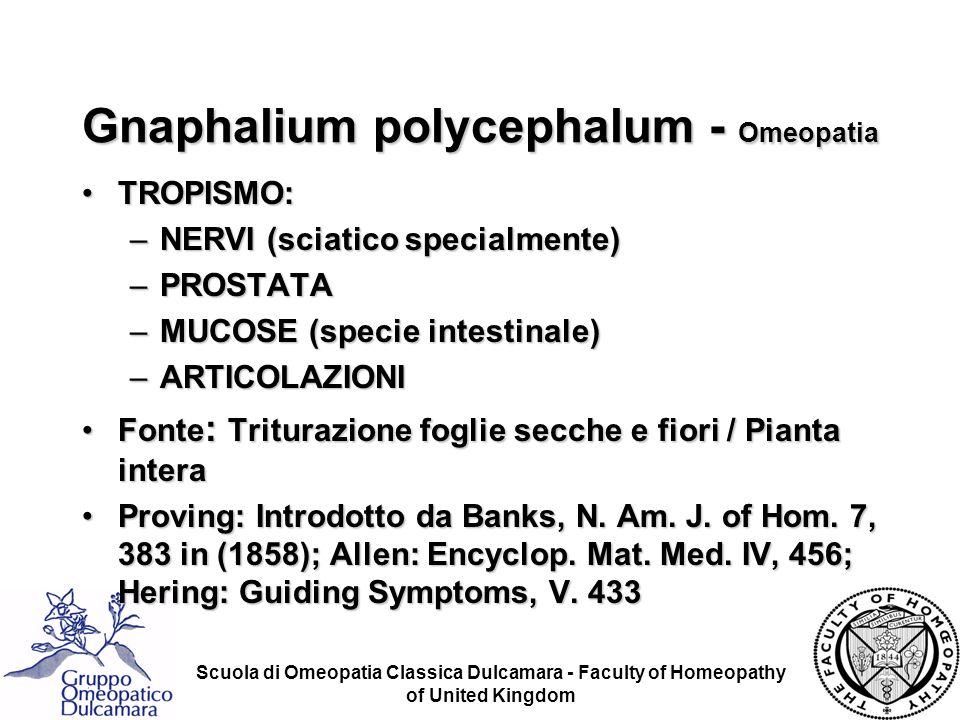 Scuola di Omeopatia Classica Dulcamara - Faculty of Homeopathy of United Kingdom Gnaphalium polycephalum - Omeopatia TROPISMO:TROPISMO: –NERVI (sciati
