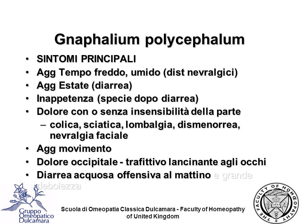 Scuola di Omeopatia Classica Dulcamara - Faculty of Homeopathy of United Kingdom Gnaphalium polycephalum SINTOMI PRINCIPALISINTOMI PRINCIPALI Agg Temp