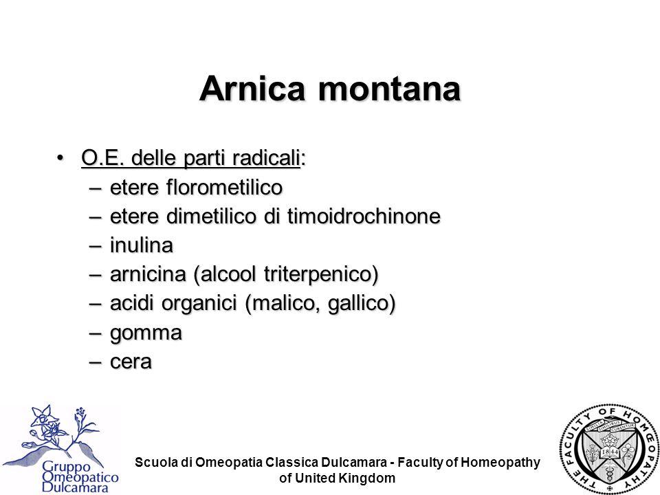 Scuola di Omeopatia Classica Dulcamara - Faculty of Homeopathy of United Kingdom Arnica montana O.E. delle parti radicali:O.E. delle parti radicali: –