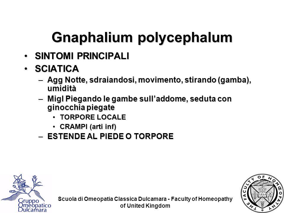 Scuola di Omeopatia Classica Dulcamara - Faculty of Homeopathy of United Kingdom Gnaphalium polycephalum SINTOMI PRINCIPALISINTOMI PRINCIPALI SCIATICA