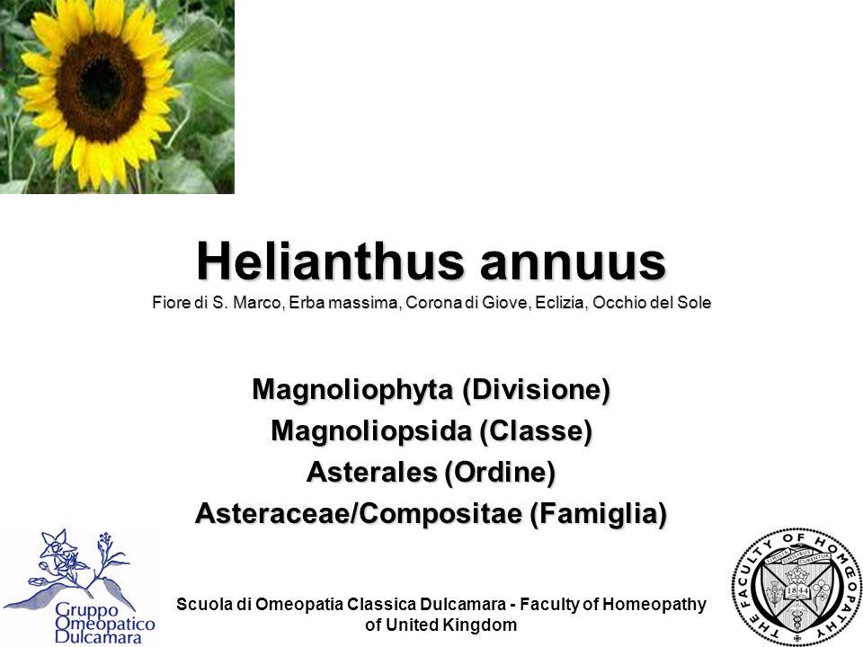 Scuola di Omeopatia Classica Dulcamara - Faculty of Homeopathy of United Kingdom Helianthus annuus Fiore di S. Marco, Erba massima, Corona di Giove, E
