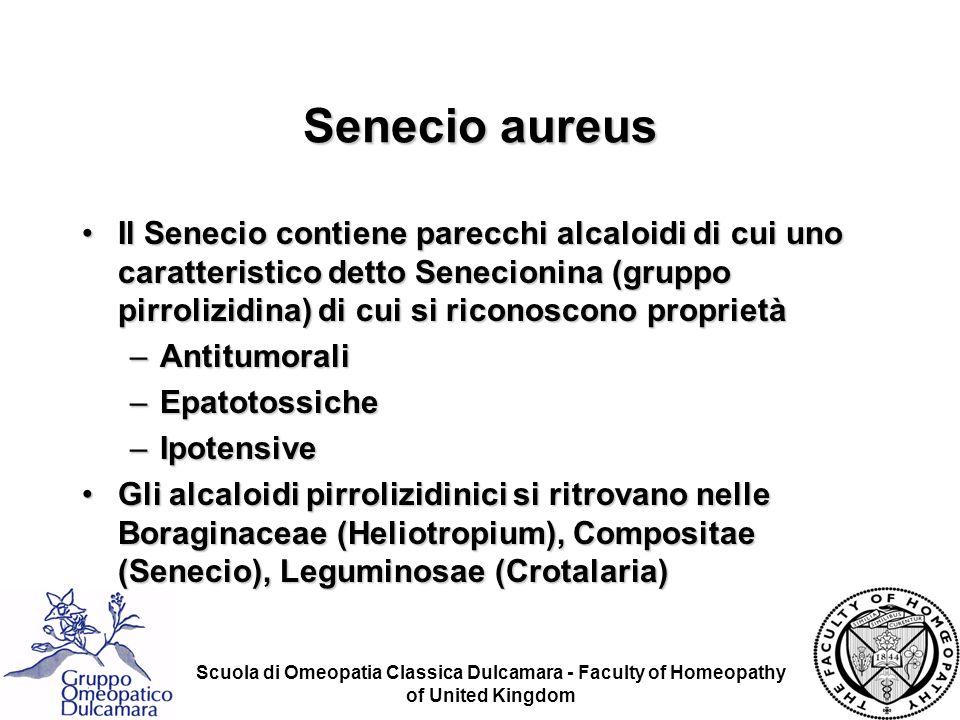 Scuola di Omeopatia Classica Dulcamara - Faculty of Homeopathy of United Kingdom Senecio aureus Il Senecio contiene parecchi alcaloidi di cui uno cara