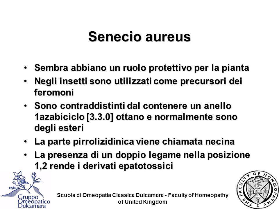 Scuola di Omeopatia Classica Dulcamara - Faculty of Homeopathy of United Kingdom Senecio aureus Sembra abbiano un ruolo protettivo per la piantaSembra