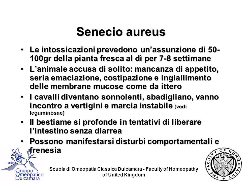 Scuola di Omeopatia Classica Dulcamara - Faculty of Homeopathy of United Kingdom Senecio aureus Le intossicazioni prevedono unassunzione di 50- 100gr