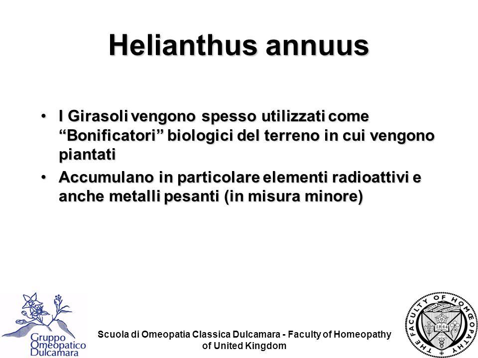 Scuola di Omeopatia Classica Dulcamara - Faculty of Homeopathy of United Kingdom Helianthus annuus I Girasoli vengono spesso utilizzati come Bonificat