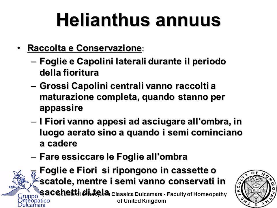 Scuola di Omeopatia Classica Dulcamara - Faculty of Homeopathy of United Kingdom Helianthus annuus Raccolta e Conservazione :Raccolta e Conservazione