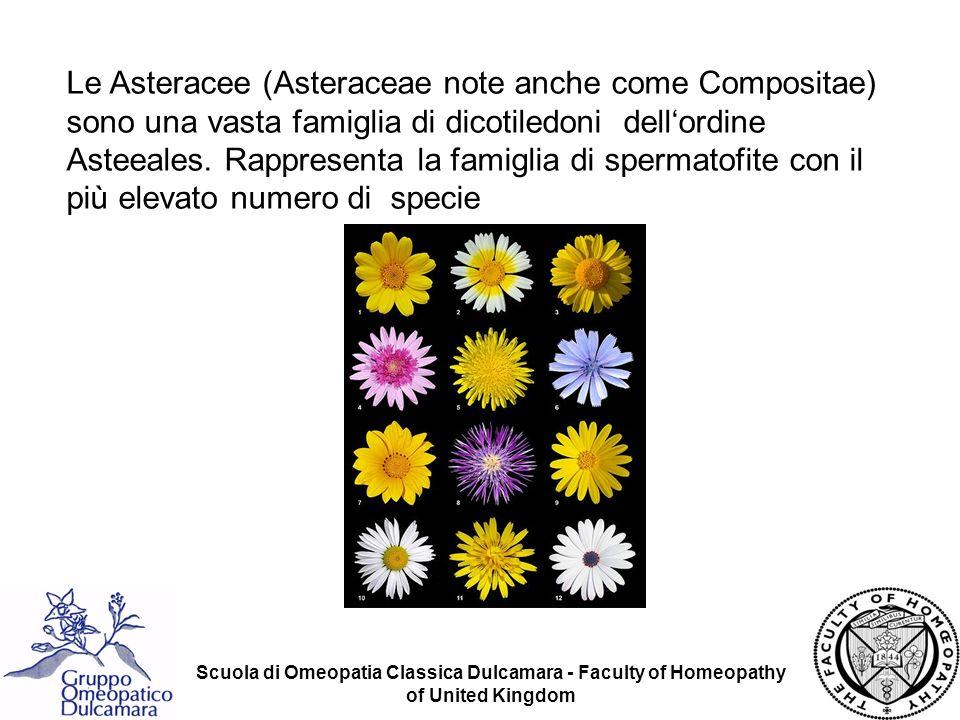 Scuola di Omeopatia Classica Dulcamara - Faculty of Homeopathy of United Kingdom Chamomilla vulgaris Ha proprietà anti-infiammatorie, locali ed interne.