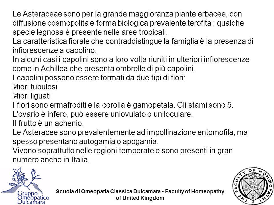 Scuola di Omeopatia Classica Dulcamara - Faculty of Homeopathy of United Kingdom Le Asteraceae sono per la grande maggioranza piante erbacee, con diff