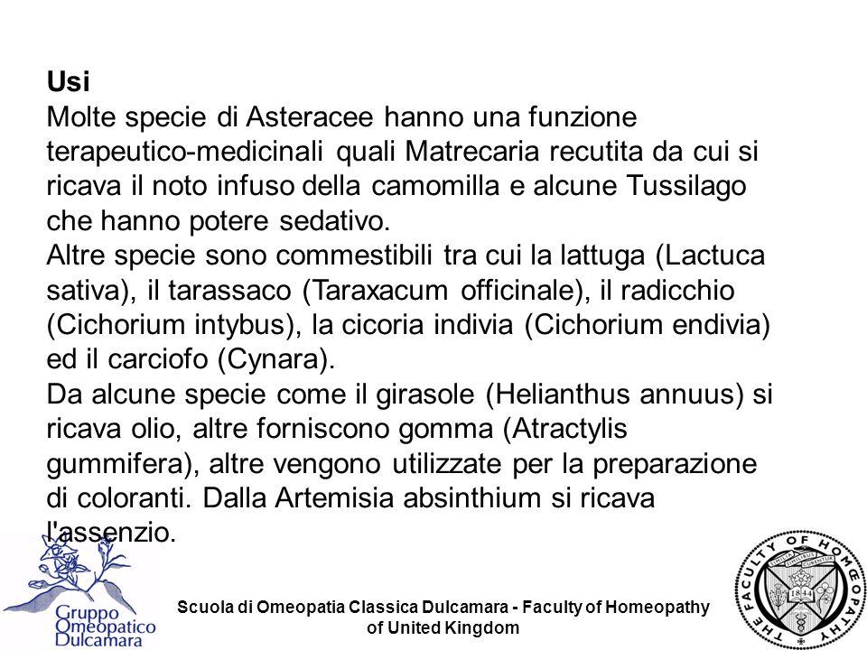 Scuola di Omeopatia Classica Dulcamara - Faculty of Homeopathy of United Kingdom Usi Molte specie di Asteracee hanno una funzione terapeutico-medicina
