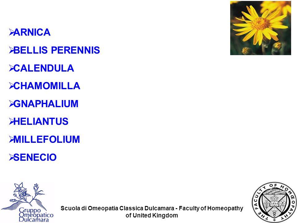 Scuola di Omeopatia Classica Dulcamara - Faculty of Homeopathy of United Kingdom Bellis Perennis omeopatia Ferite dei tessuti profondi dopo interventi importanti, spec.