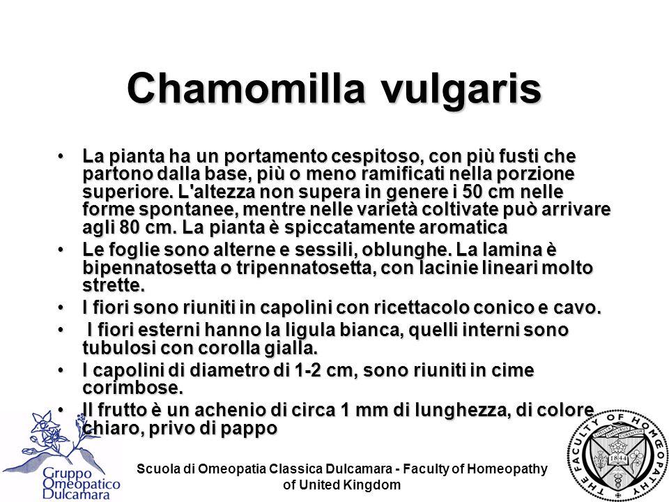 Chamomilla vulgaris La pianta ha un portamento cespitoso, con più fusti che partono dalla base, più o meno ramificati nella porzione superiore. L'alte