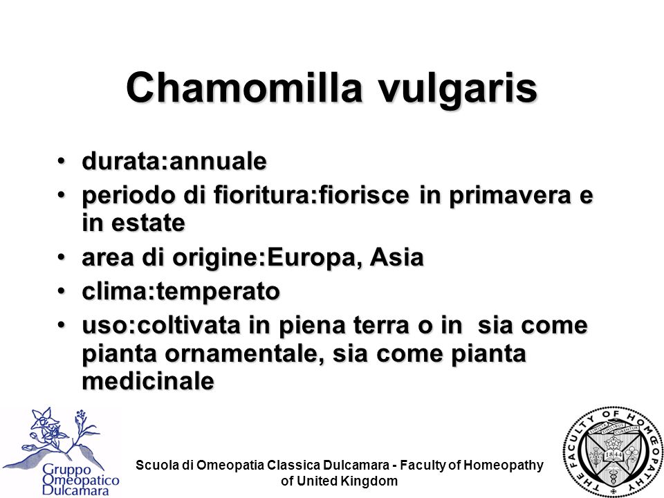 Scuola di Omeopatia Classica Dulcamara - Faculty of Homeopathy of United Kingdom Chamomilla vulgaris durata:annualedurata:annuale periodo di fioritura