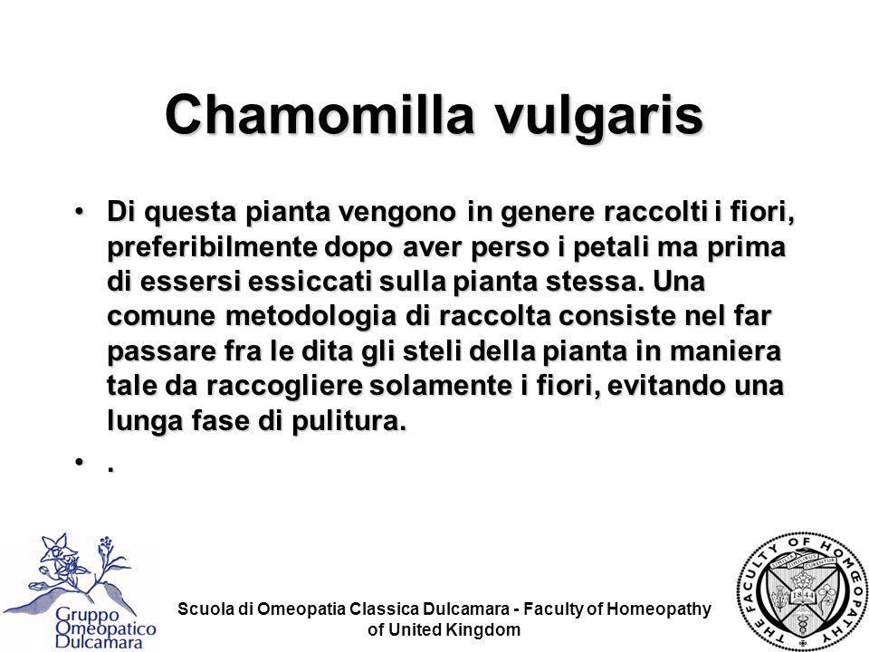 Scuola di Omeopatia Classica Dulcamara - Faculty of Homeopathy of United Kingdom Chamomilla vulgaris Di questa pianta vengono in genere raccolti i fio