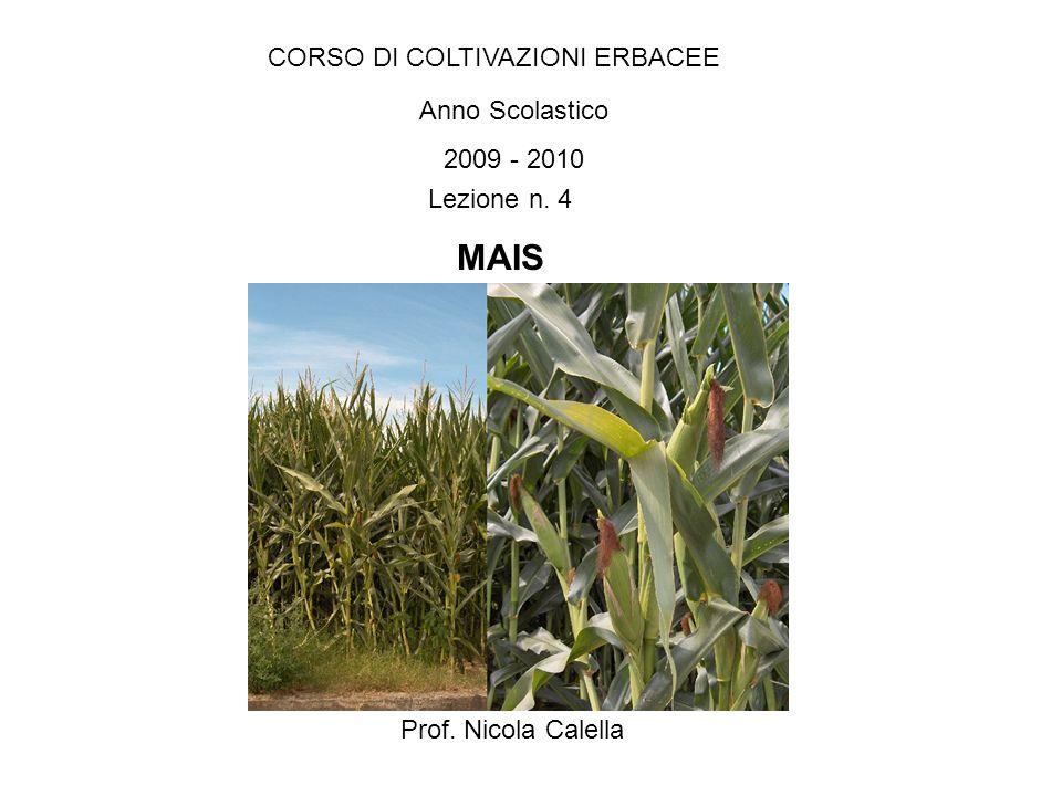CORSO DI COLTIVAZIONI ERBACEE Anno Scolastico 2009 - 2010 Prof. Nicola Calella Lezione n. 4 MAIS