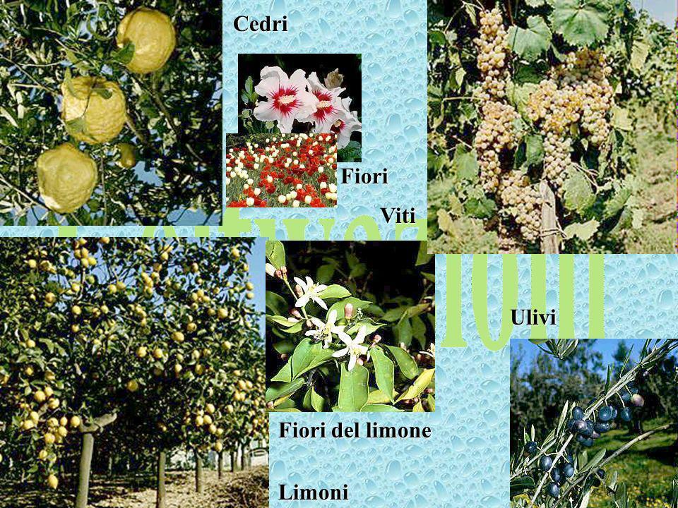 palustre Canna palustre Cipresso oleandro Foglie e fiori di oleandroPioppiSalice