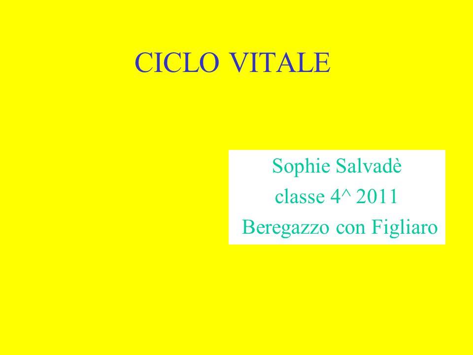 CICLO VITALE Sophie Salvadè classe 4^ 2011 Beregazzo con Figliaro
