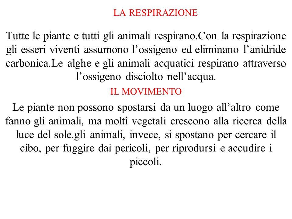 LA RESPIRAZIONE Tutte le piante e tutti gli animali respirano.Con la respirazione gli esseri viventi assumono lossigeno ed eliminano lanidride carboni