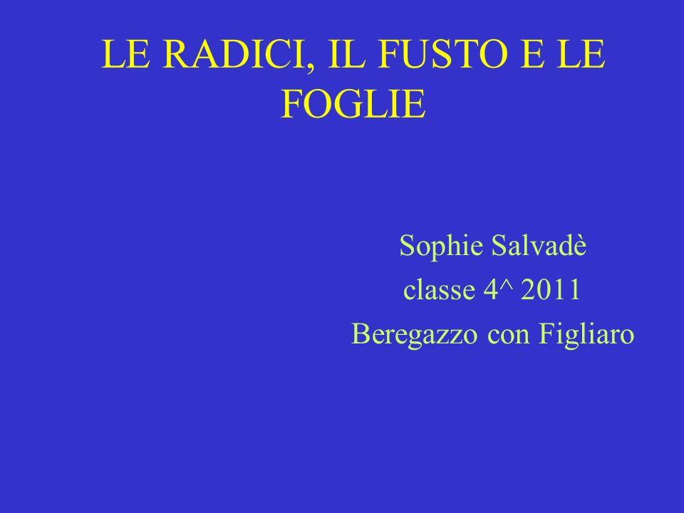 LE RADICI, IL FUSTO E LE FOGLIE Sophie Salvadè classe 4^ 2011 Beregazzo con Figliaro
