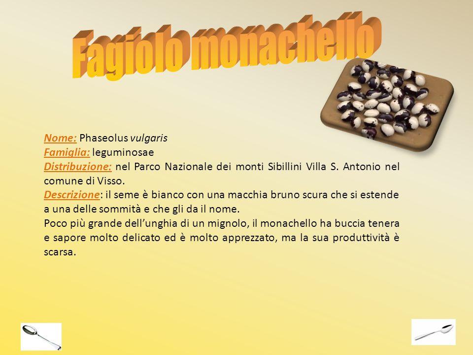 Nome: Phaseolus vulgaris Famiglia: leguminosae Distribuzione: nel Parco Nazionale dei monti Sibillini Villa S. Antonio nel comune di Visso. Descrizion