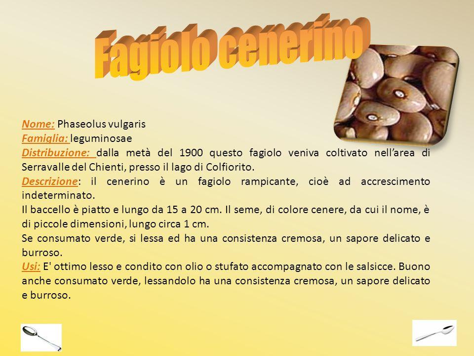 Nome: Phaseolus vulgaris Famiglia: leguminosae Distribuzione: dalla metà del 1900 questo fagiolo veniva coltivato nellarea di Serravalle del Chienti,