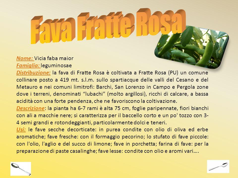 Nome: Vicia faba maior Famiglia: leguminosae Distribuzione: la fava di Fratte Rosa è coltivata a Fratte Rosa (PU) un comune collinare posto a 419 mt.