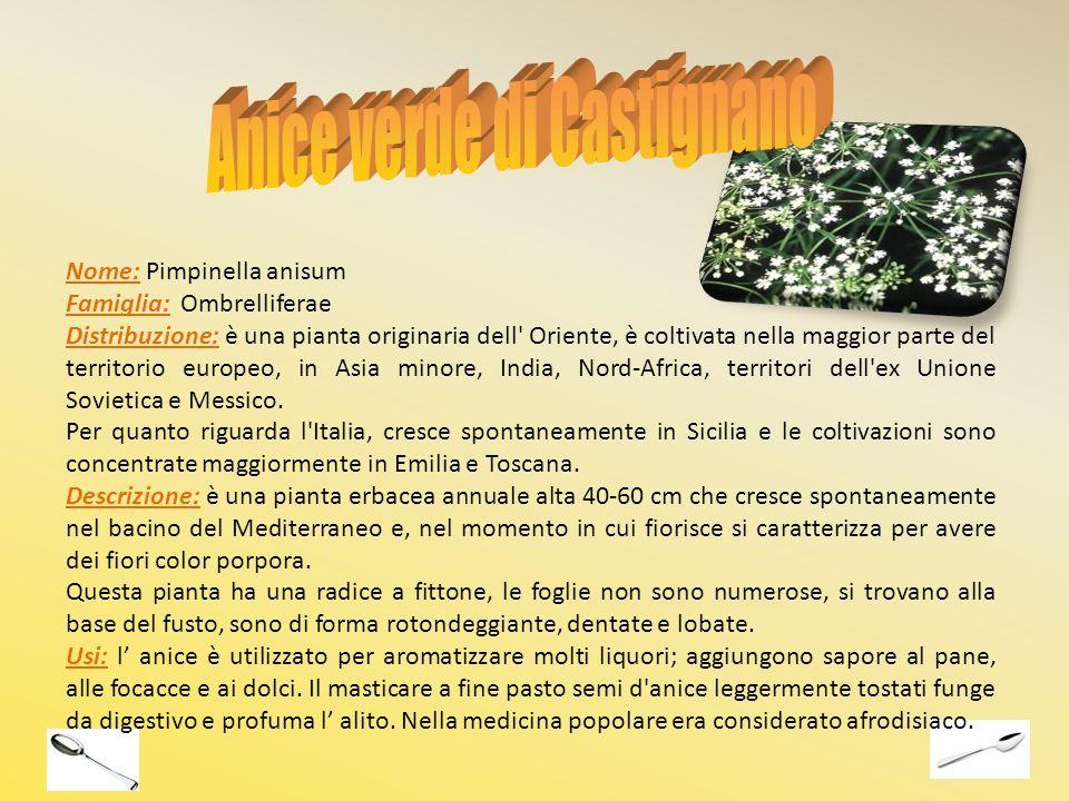 Nome: Pimpinella anisum Famiglia: Ombrelliferae Distribuzione: è una pianta originaria dell' Oriente, è coltivata nella maggior parte del territorio e