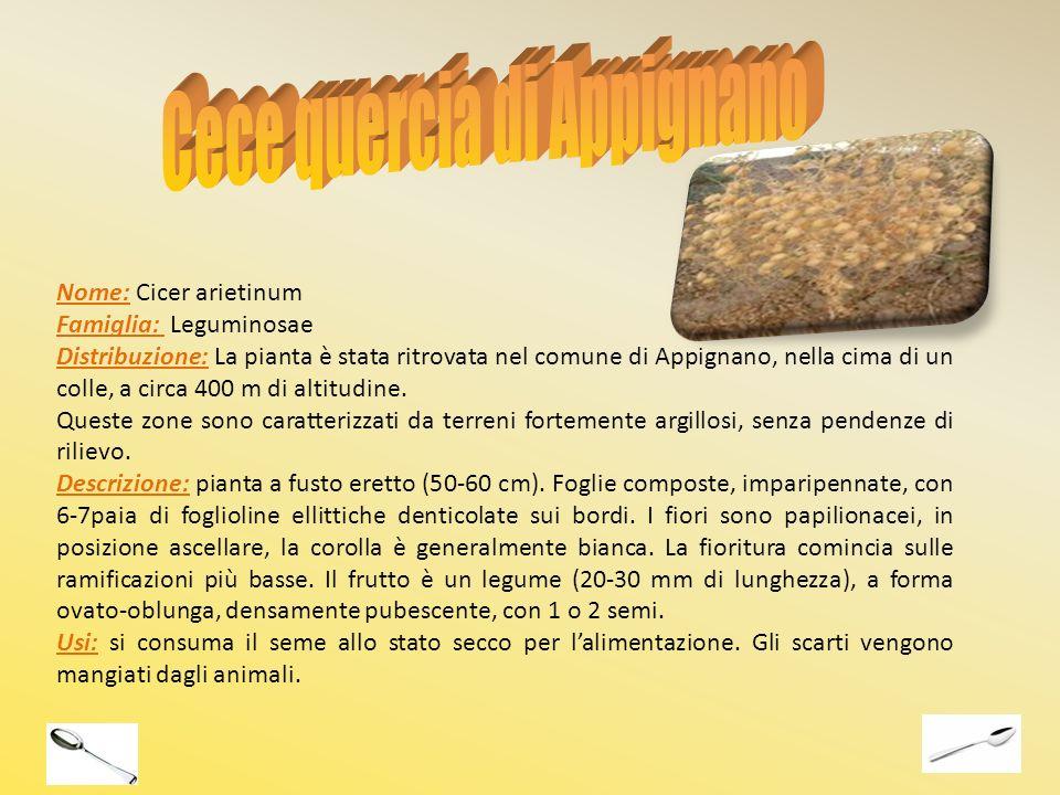 Nome: Cicer arietinum Famiglia: Leguminosae Distribuzione: La pianta è stata ritrovata nel comune di Appignano, nella cima di un colle, a circa 400 m