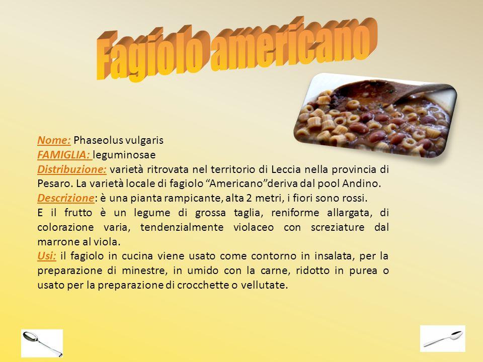 Nome: Phaseolus vulgaris FAMIGLIA: leguminosae Distribuzione: varietà ritrovata nel territorio di Leccia nella provincia di Pesaro. La varietà locale