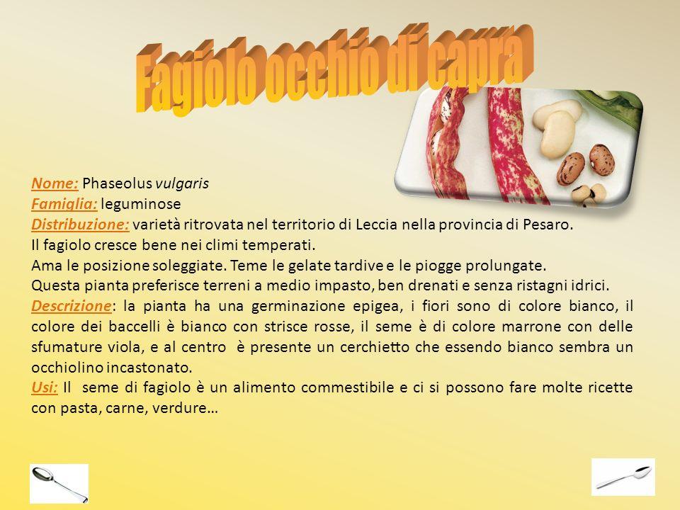 Nome: Phaseolus vulgaris Famiglia: leguminose Distribuzione: varietà ritrovata nel territorio di Leccia nella provincia di Pesaro. Il fagiolo cresce b
