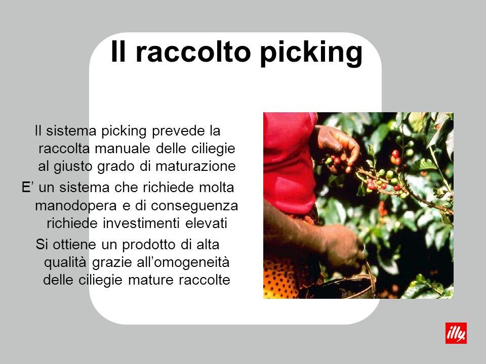 Il raccolto picking Il sistema picking prevede la raccolta manuale delle ciliegie al giusto grado di maturazione E un sistema che richiede molta manod
