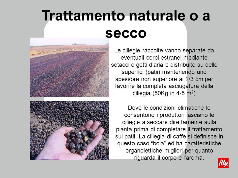 Trattamento naturale o a secco Le ciliegie raccolte vanno separate da eventuali corpi estranei mediante setacci o getti daria e distribuite su delle s
