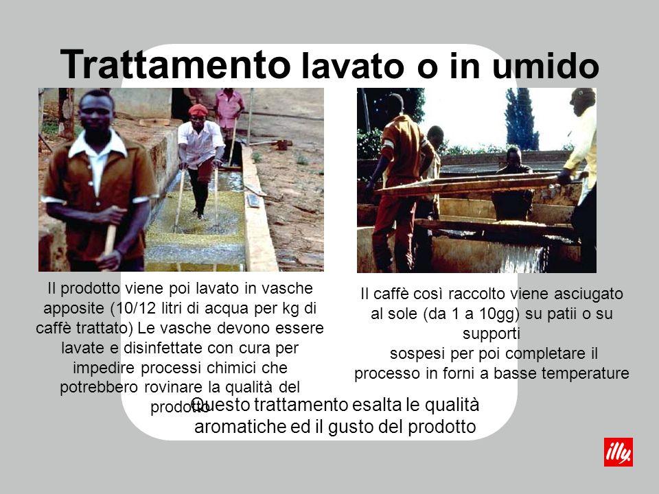 Il prodotto viene poi lavato in vasche apposite (10/12 litri di acqua per kg di caffè trattato) Le vasche devono essere lavate e disinfettate con cura