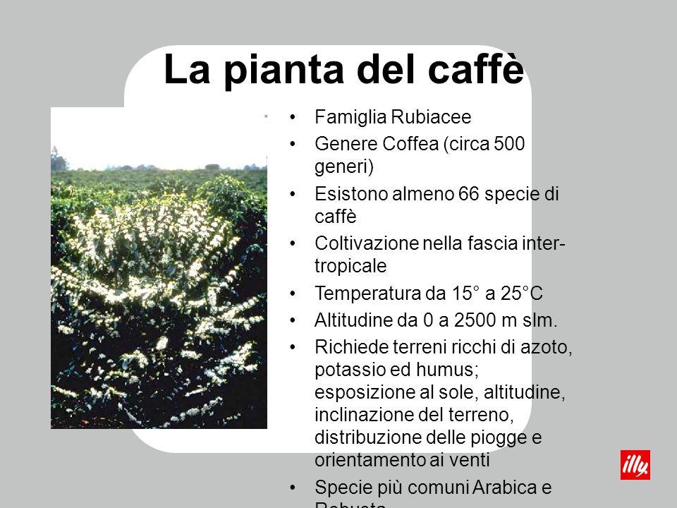 La pianta del caffè Famiglia Rubiacee Genere Coffea (circa 500 generi) Esistono almeno 66 specie di caffè Coltivazione nella fascia inter- tropicale T
