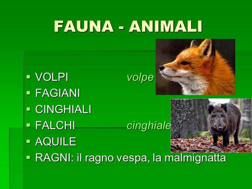 FAUNA - ANIMALI VOLPIvolpe VOLPIvolpe FAGIANI FAGIANI CINGHIALI CINGHIALI FALCHIcinghiale FALCHIcinghiale AQUILE AQUILE RAGNI: il ragno vespa, la malm