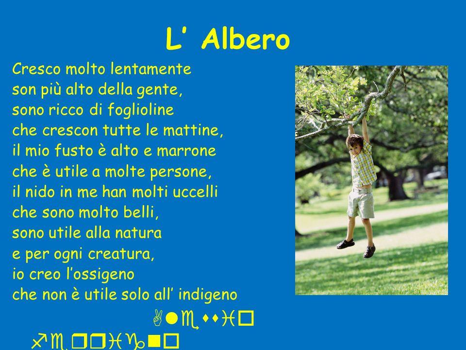 L Albero Cresco molto lentamente son più alto della gente, sono ricco di foglioline che crescon tutte le mattine, il mio fusto è alto e marrone che è