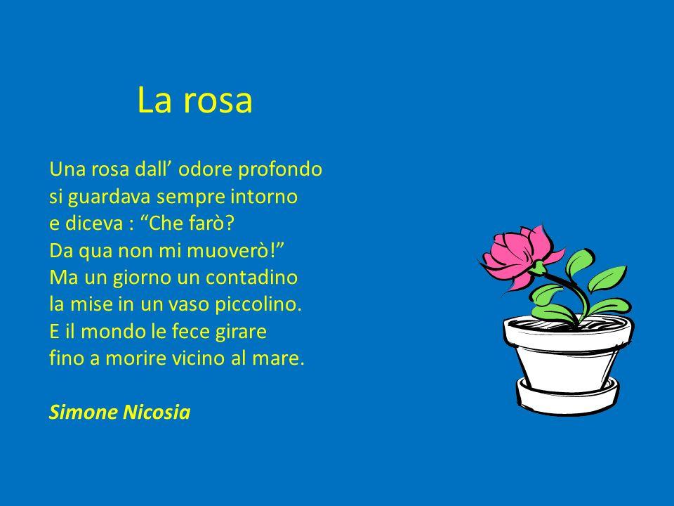 La rosa Una rosa dall odore profondo si guardava sempre intorno e diceva : Che farò? Da qua non mi muoverò! Ma un giorno un contadino la mise in un va