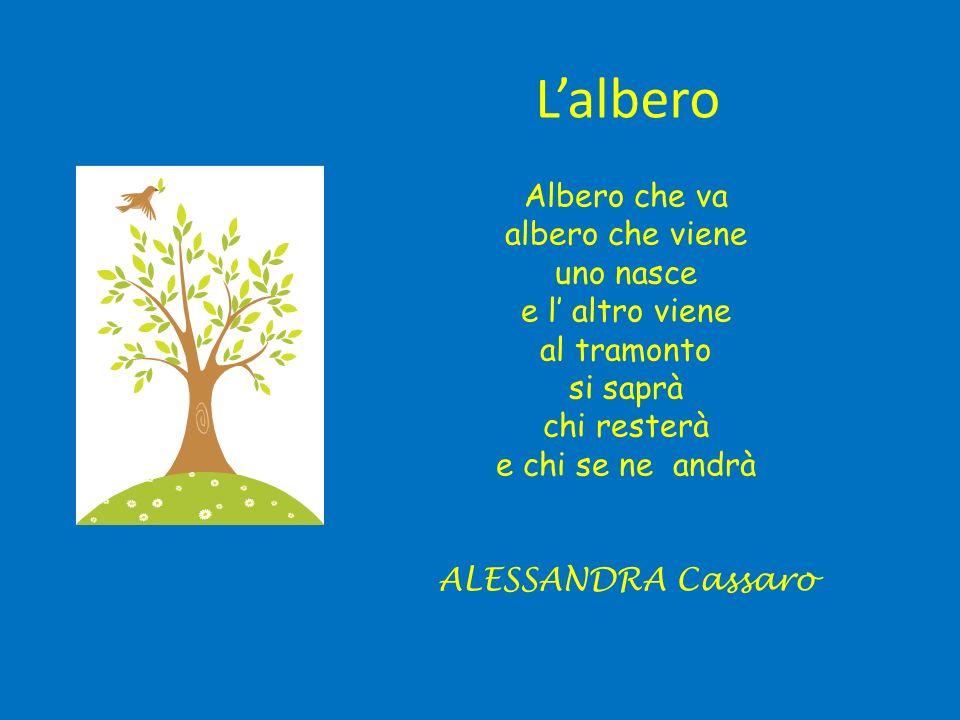 Lalbero Albero che va albero che viene uno nasce e l altro viene al tramonto si saprà chi resterà e chi se ne andrà ALESSANDRA Cassaro