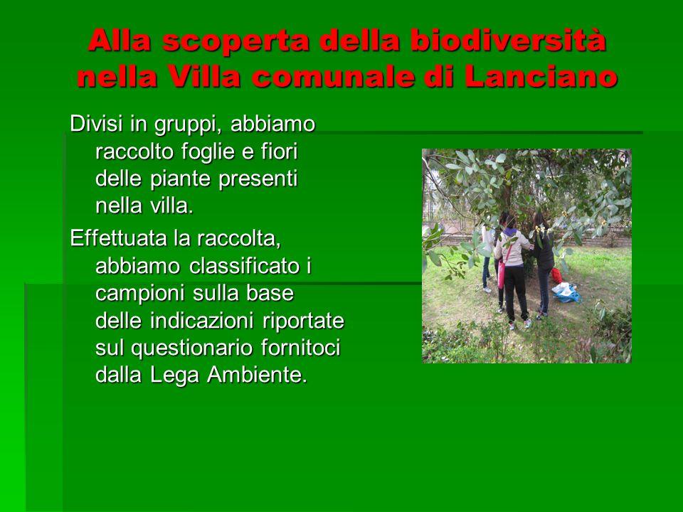 Alla scoperta della biodiversità nella Villa comunale di Lanciano Divisi in gruppi, abbiamo raccolto foglie e fiori delle piante presenti nella villa.