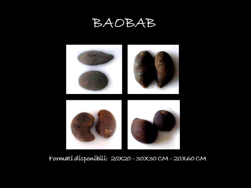 BAOBAB Formati disponibili: 20X20 - 30X30 CM - 20X60 CM