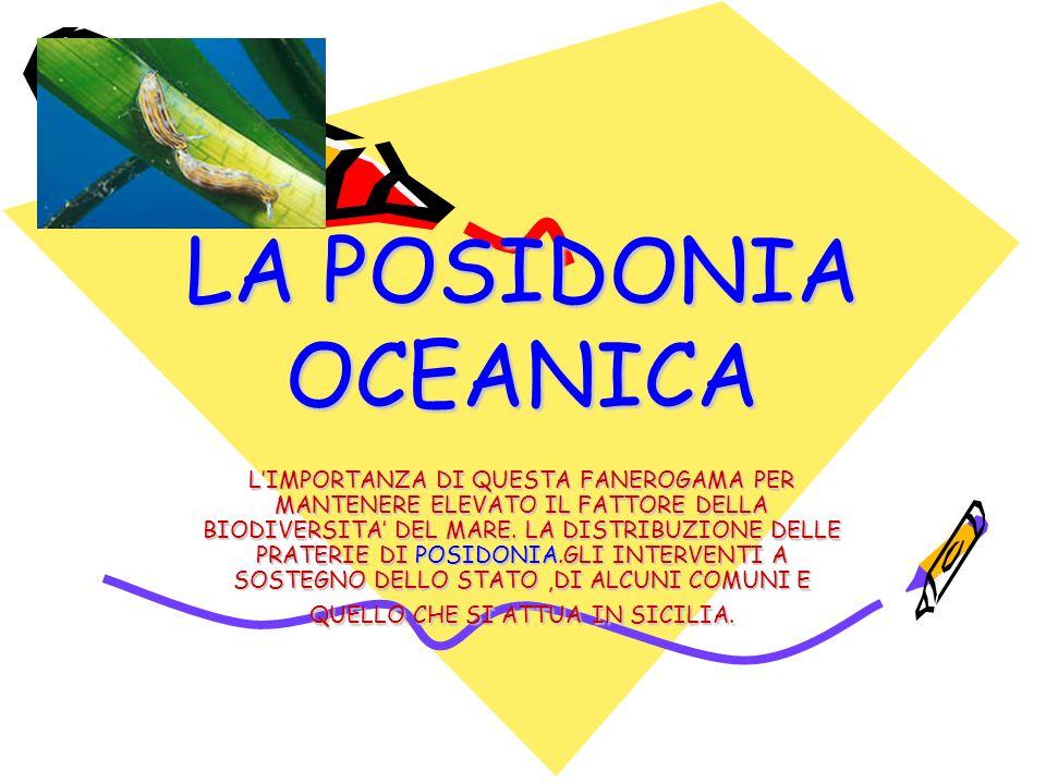 LA POSIDONIA OCEANICA LIMPORTANZA DI QUESTA FANEROGAMA PER MANTENERE ELEVATO IL FATTORE DELLA BIODIVERSITA DEL MARE.
