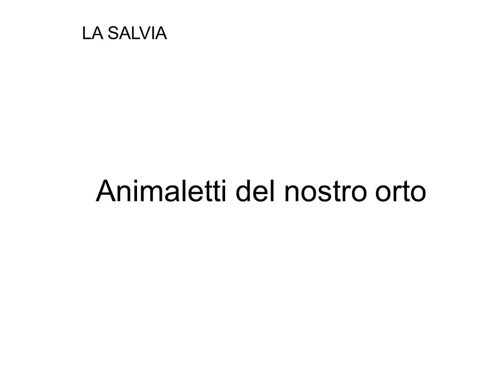 Animaletti del nostro orto LA SALVIA