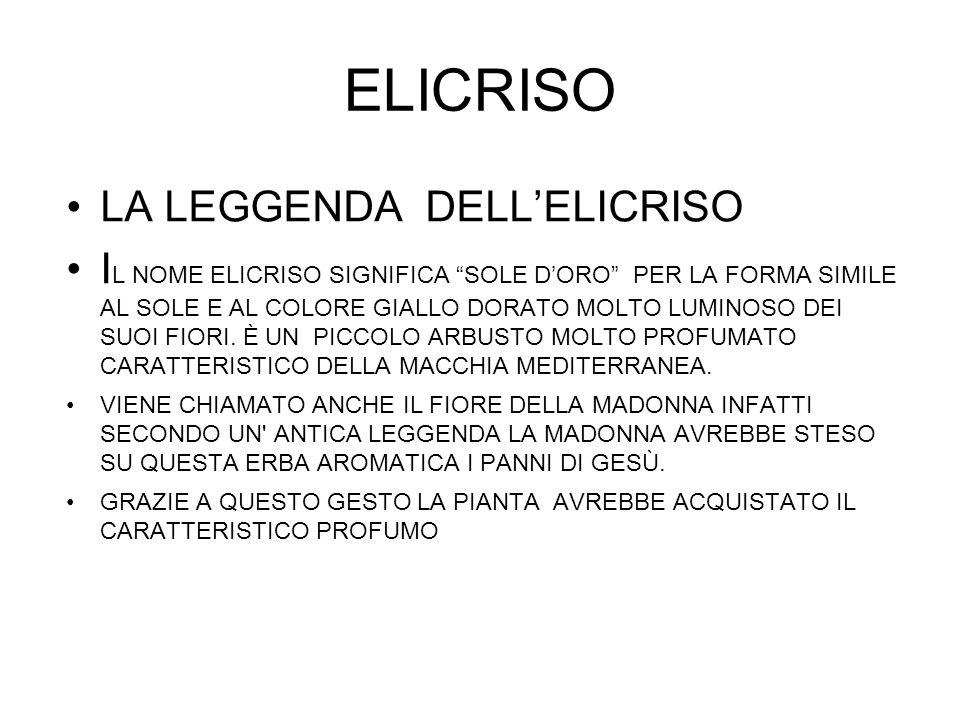 ELICRISO LA LEGGENDA DELLELICRISO I L NOME ELICRISO SIGNIFICA SOLE DORO PER LA FORMA SIMILE AL SOLE E AL COLORE GIALLO DORATO MOLTO LUMINOSO DEI SUOI FIORI.