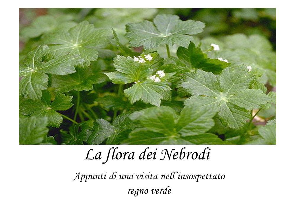 La flora dei Nebrodi Appunti di una visita nellinsospettato regno verde