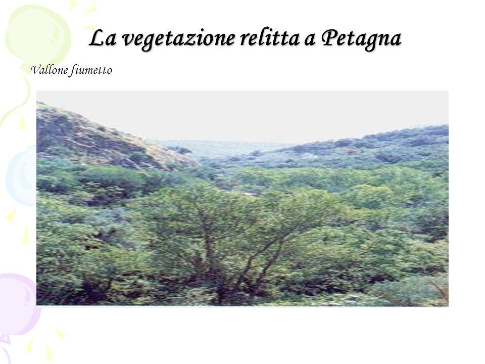 La vegetazione relitta a Petagna Vallone fiumetto
